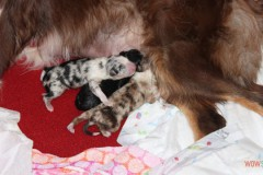 201306172bpuppies2b006.jpg