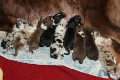 201306172bpuppies2b031.jpg